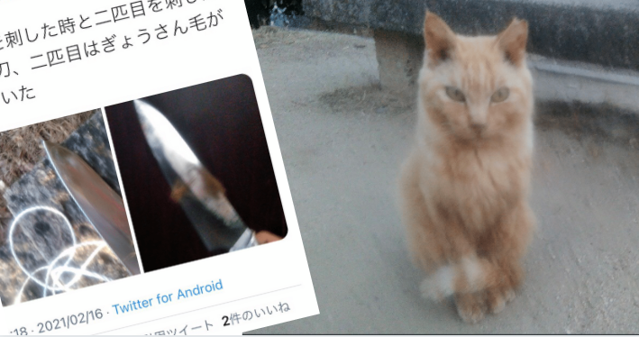 森本奏史のツイッター•ニコニコ動画特定!「広島尾道市東土堂町•猫(牛刀)虐待事件」